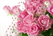 Pink Roses pictures HD