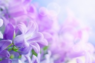Purple flowers HD pictures