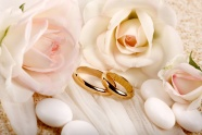 Ring white roses pictures