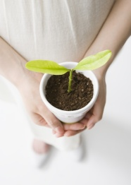 Small seedling pictures