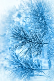 Winter plant close-up picture download