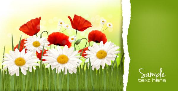 Vivid Chrysanthemum vector background 03