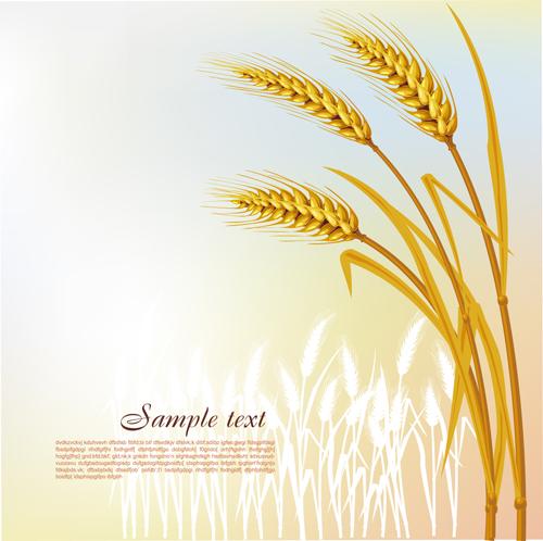 Golden Wheat vector background set 01